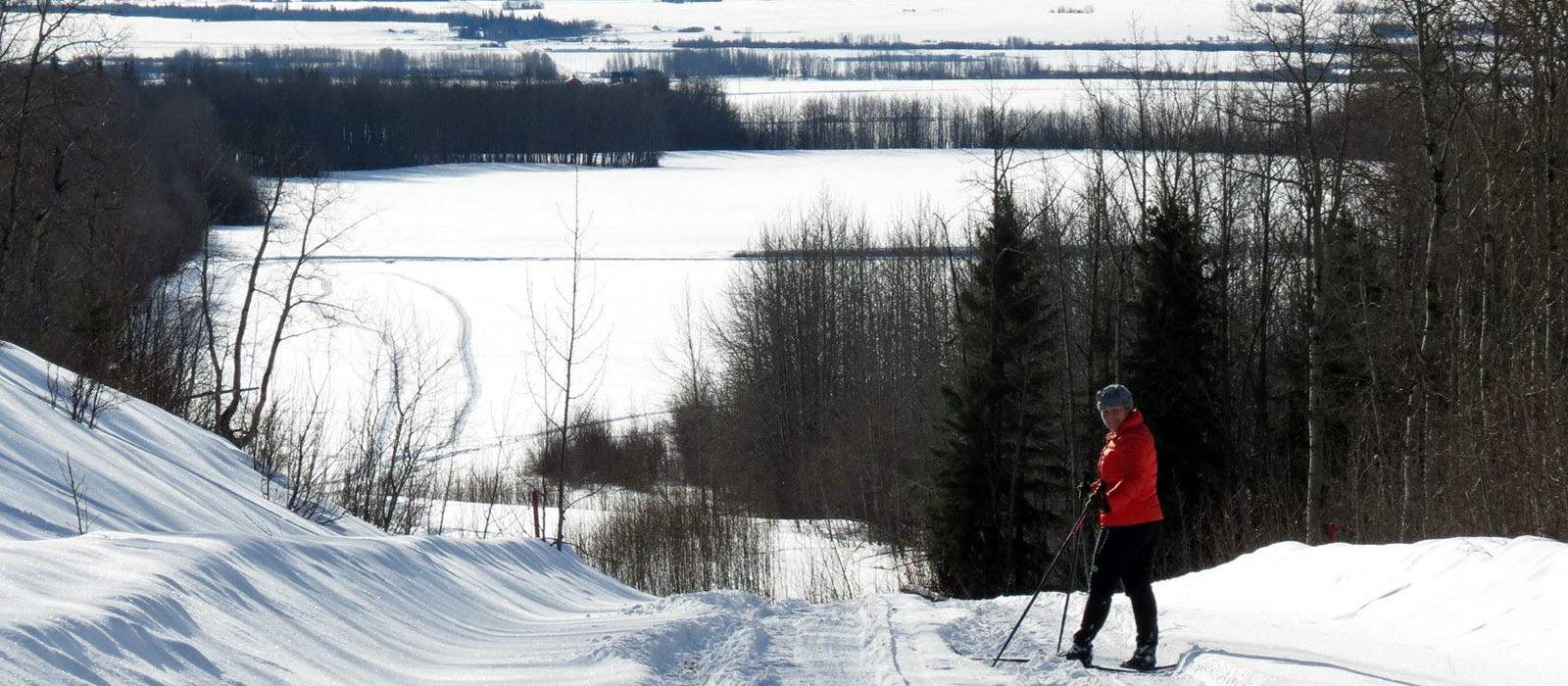 Cross Country Skier on trails